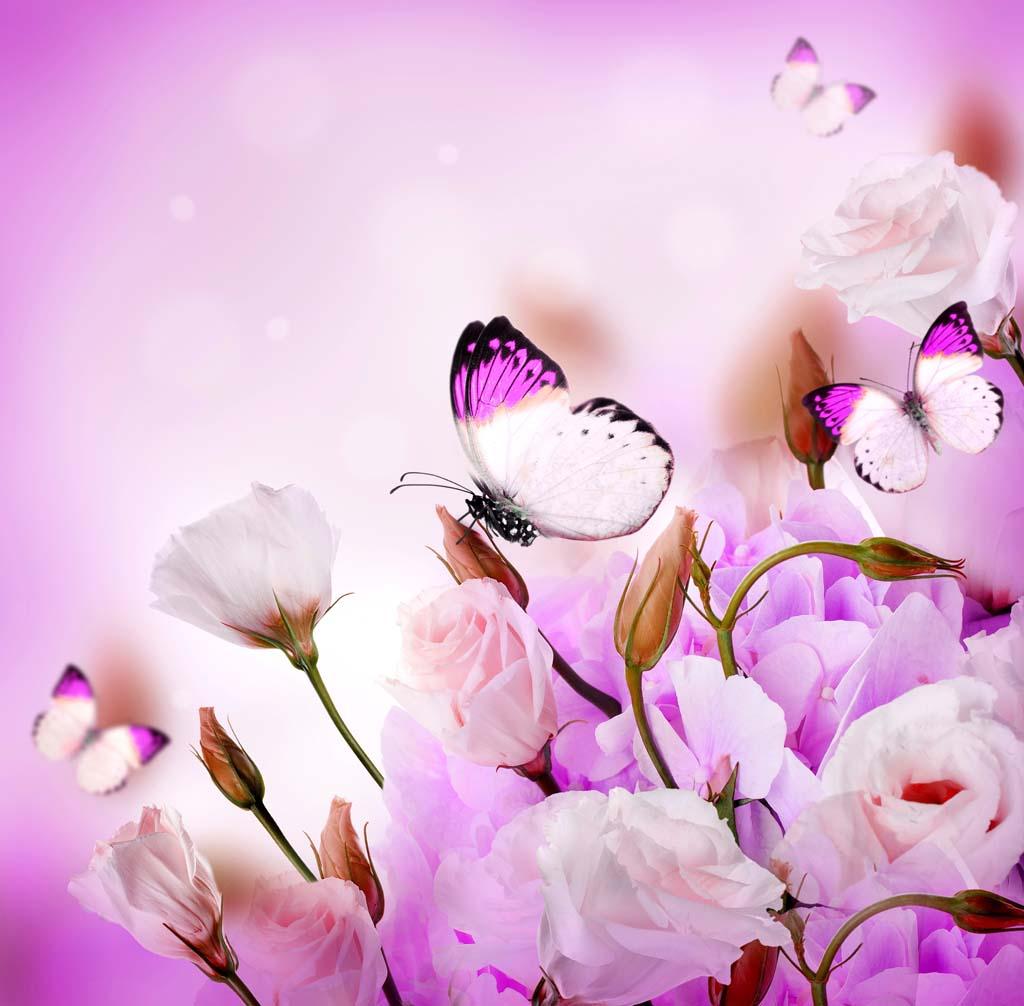 Открытка бабочка на розе