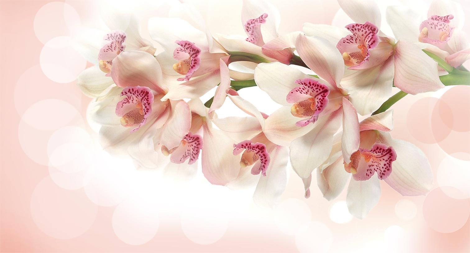 Открытка орхидеи для фотошопа
