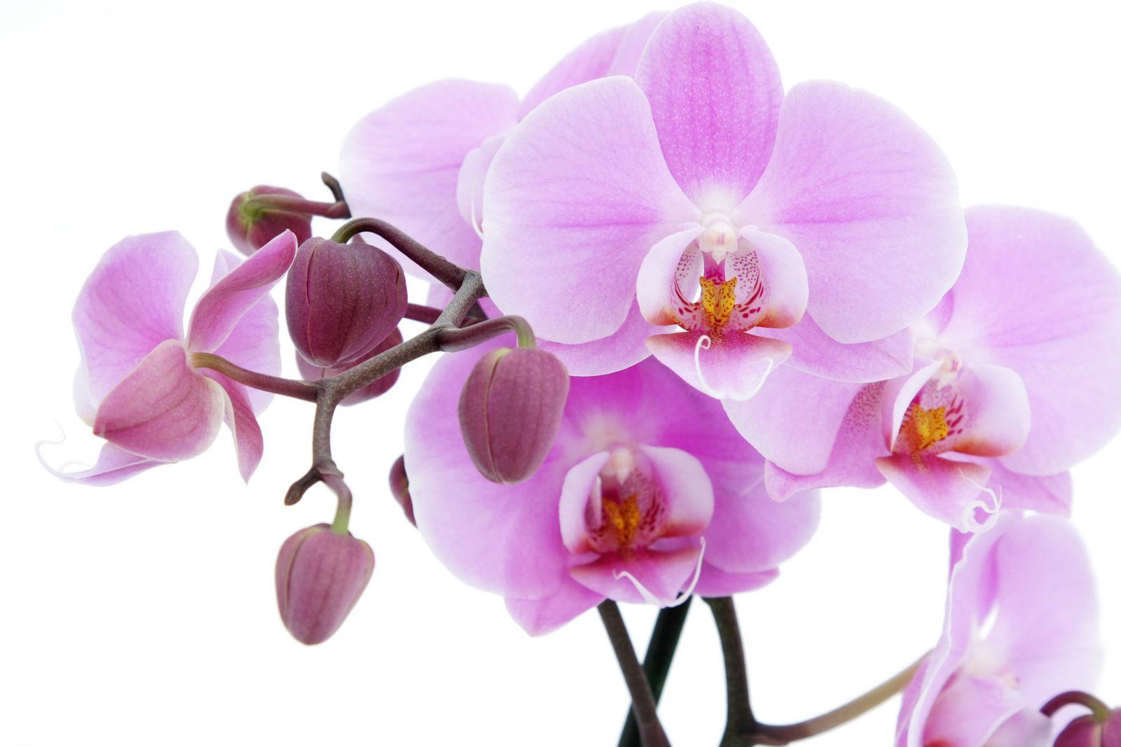 Картинки с орхидеей на рабочий стол, надпись