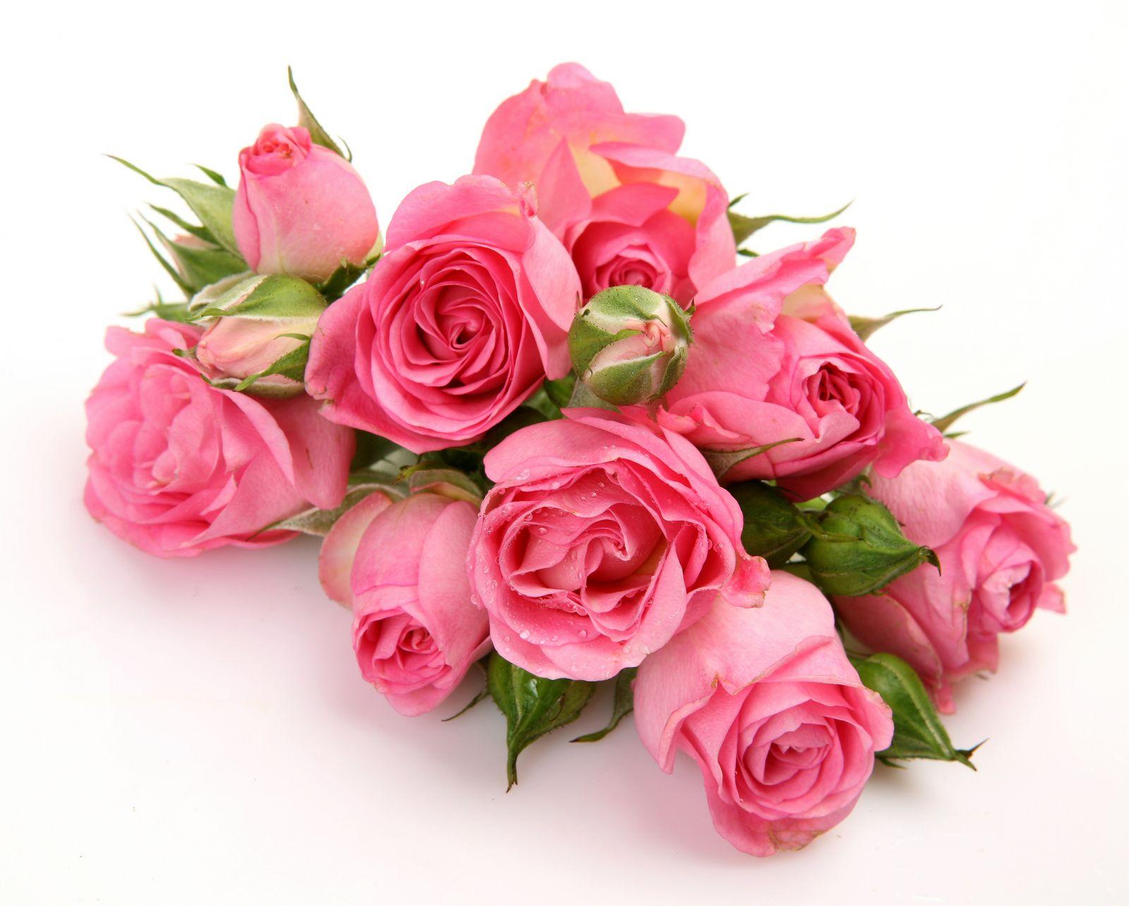 девичник, розовые розы картинки красивые горизонтальные они входят